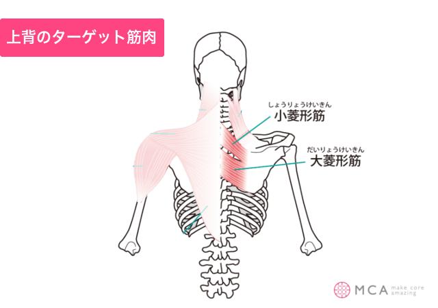 上背のターゲット筋肉